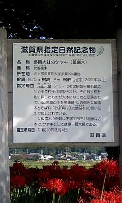 多賀の欅の説明看板