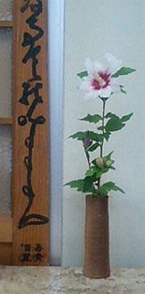 芙蓉と木槿_研究所玄関