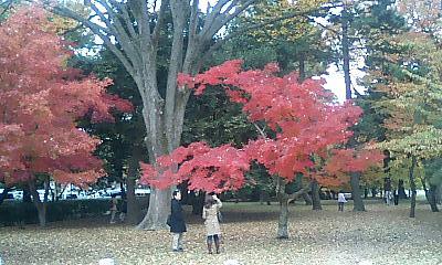御苑内には、紅葉の木がたくさんあります