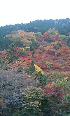 色とりどりの照り葉