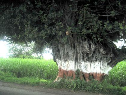 インドの国道