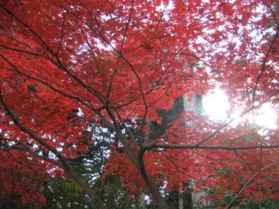 紅葉美しい野村美術館界隈