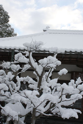 自坊の雪景色