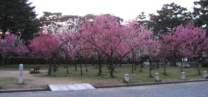 御苑の桃園