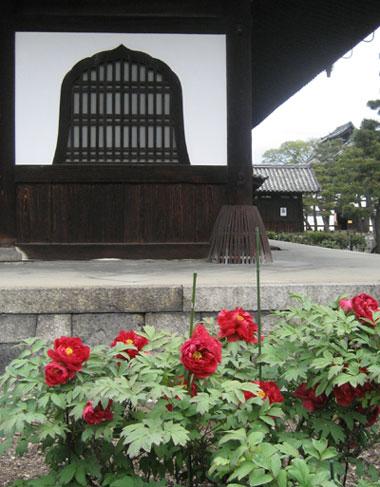 建仁寺の芍薬