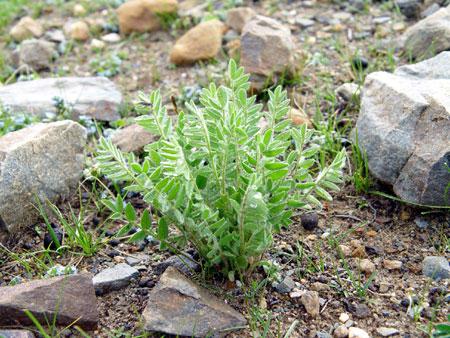 Plants in Tibet