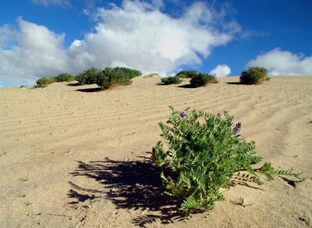 砂漠の中での希望