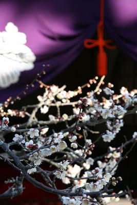 梅のほころぶ龍沢寺