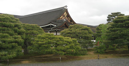 美しい松の木