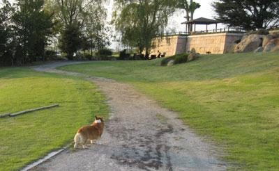 蓮池の里 多目的公園