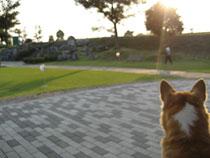 グラウンドゴルフをする人を見ています